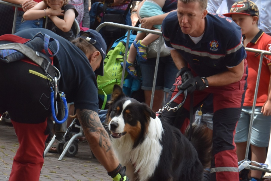 Démonstration Rescue Dogs